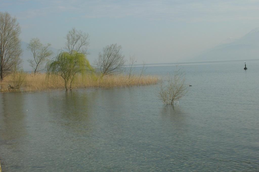 la-pesca-in-lago
