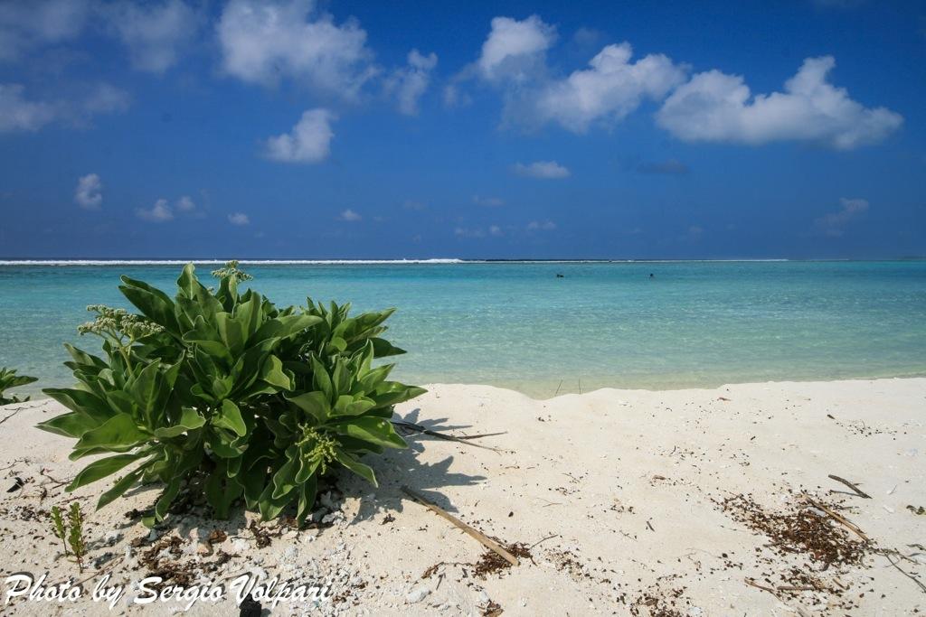 maldives-fishing