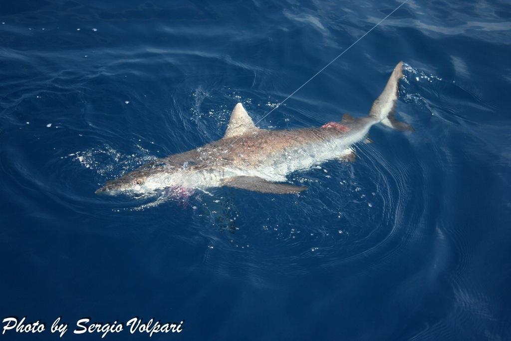pesca-allo-squalo