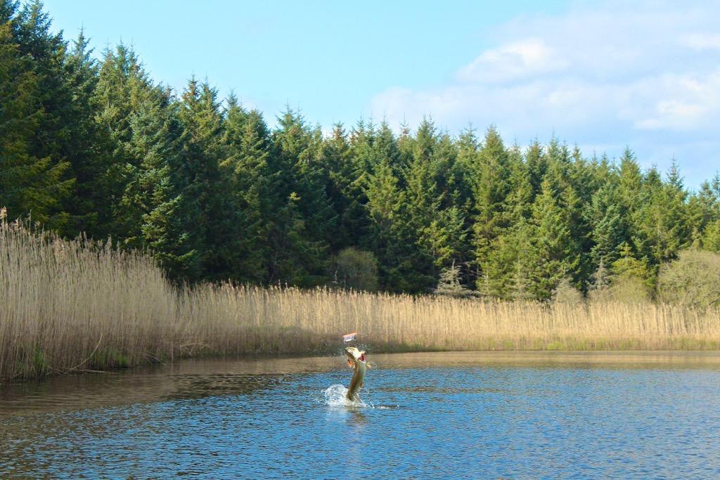 pesca-al-luccio-in-irlanda