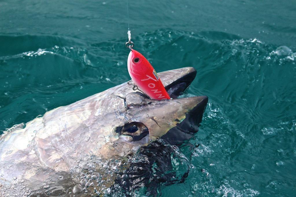 pesca-sulle-mangianze