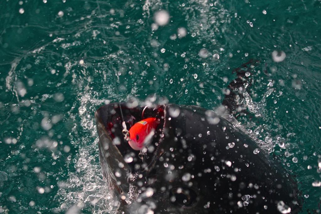 tonni-adriatico