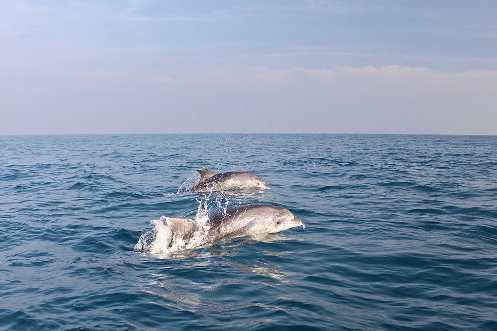 delfini-mare-adriatico