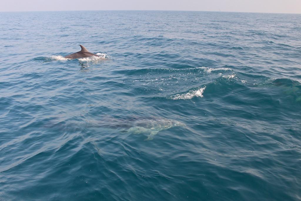 delfini-oltremare