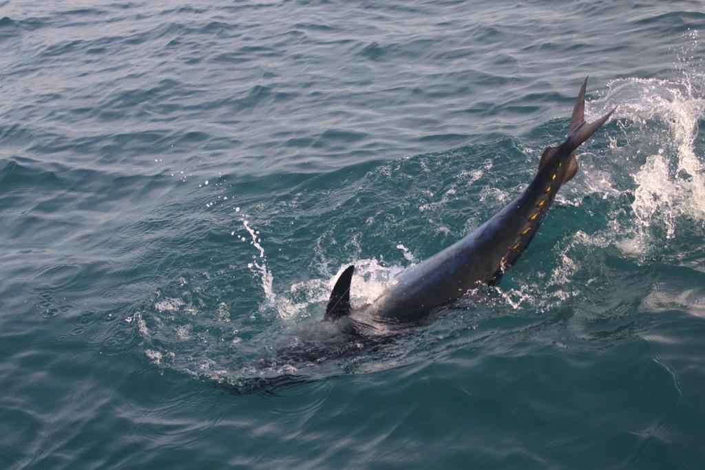pesca-ai-tonni