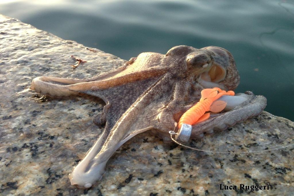 pesca-del-polpo