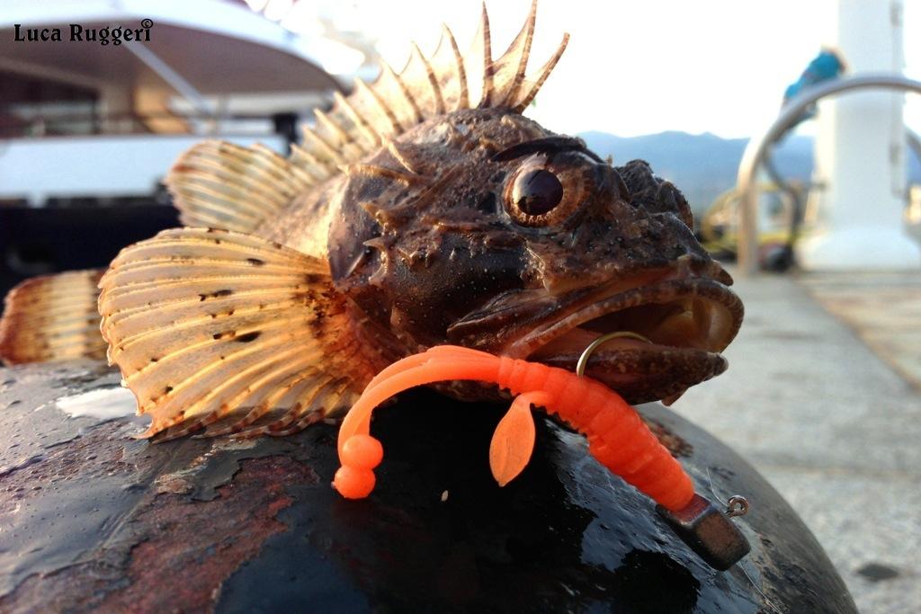 Gambero da pesca di video